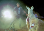 Wake in Fright de Ted Kotcheff