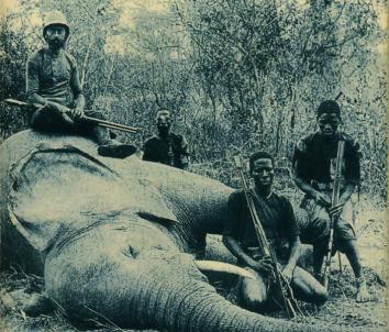Les racines du ciel de Romain Gary : les éléphants de Morel | La ...